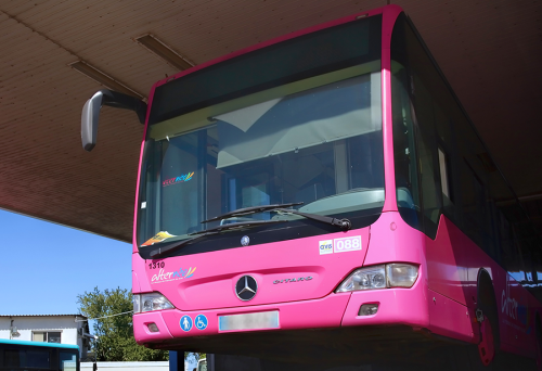 bus-rose